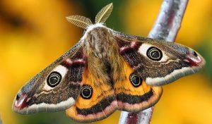 Mariposa significado espiritual