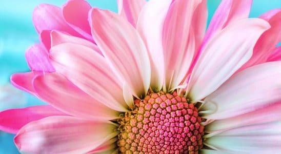 O que significa sentir cheiro de flores de velório?