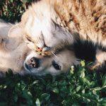 Oração dos animais falecidos